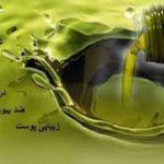 روغن زیتون درجه یک ایرانی
